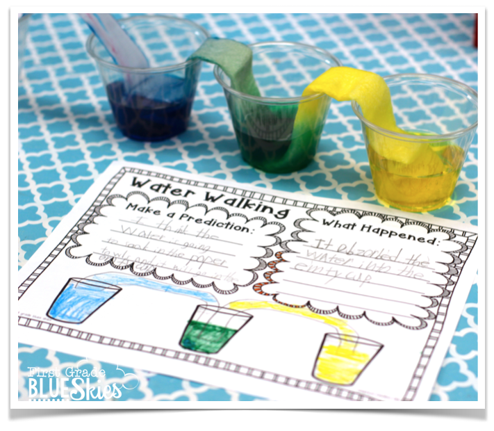 Water Walk Experiment FREEBIE and Bumblebees Close Read - First ...